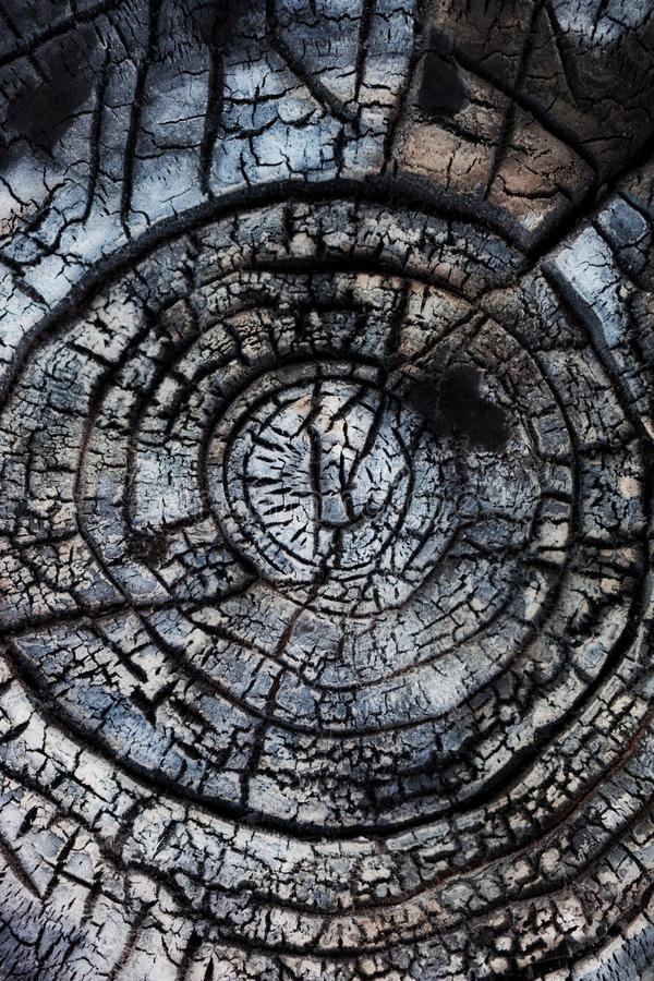 Close-up of burned wood. stock images