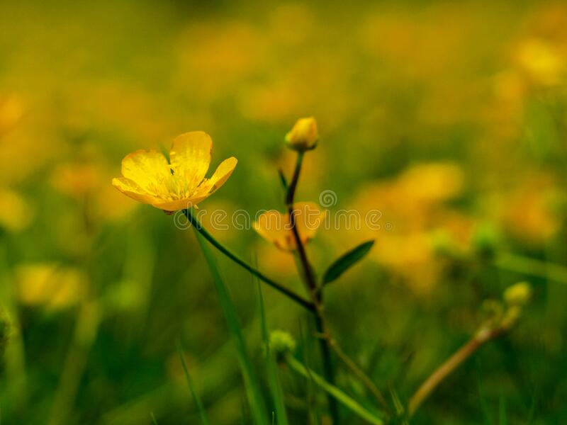 Close up of a butterflower royalty free stock photography
