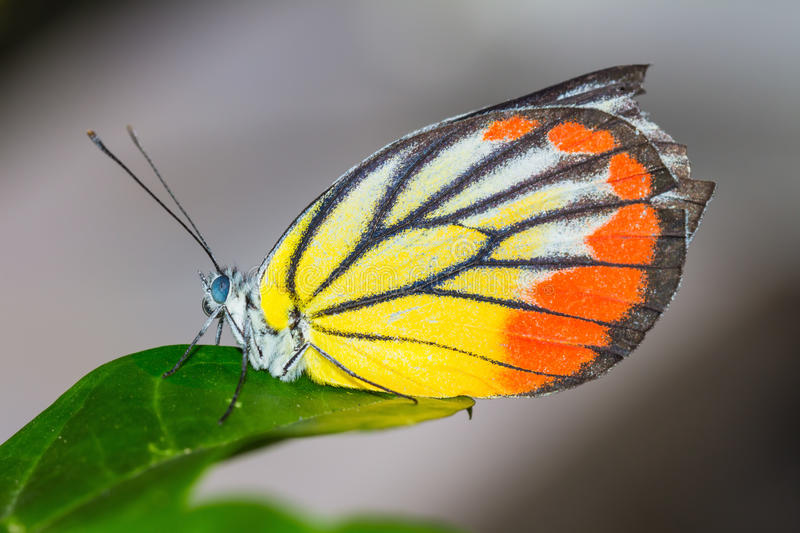 Download Close up of butterfly stock photo. Image of green, colorful - 27328198