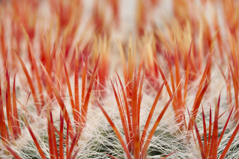 Download Close up of an cactus stock photo. Image of ball, needle - 22986270