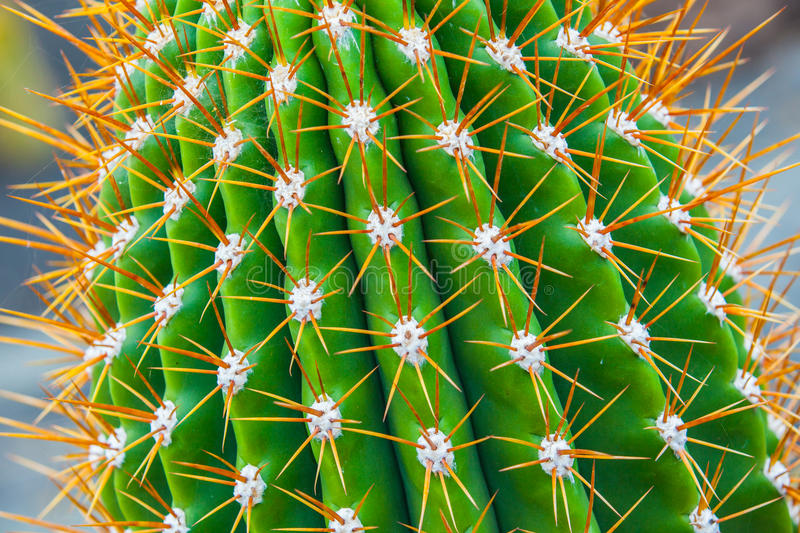 Download Close-up cactus stock image. Image of leaf, earth, desert - 23316909