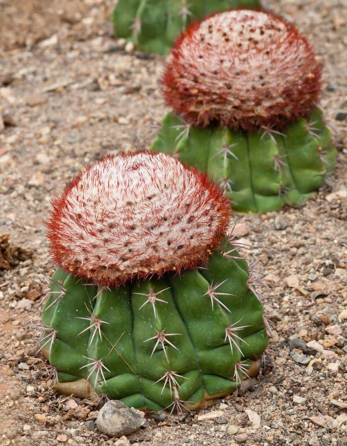 Close up of cactus.