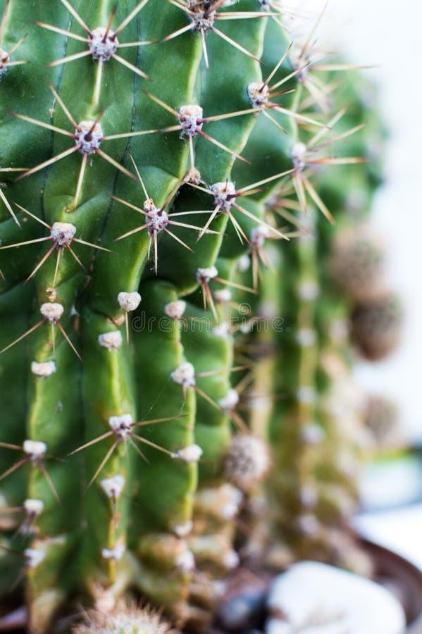 Close up of a cactus.  stock photography