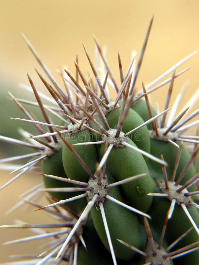 Close-up on a cactus. California. royalty free stock photo