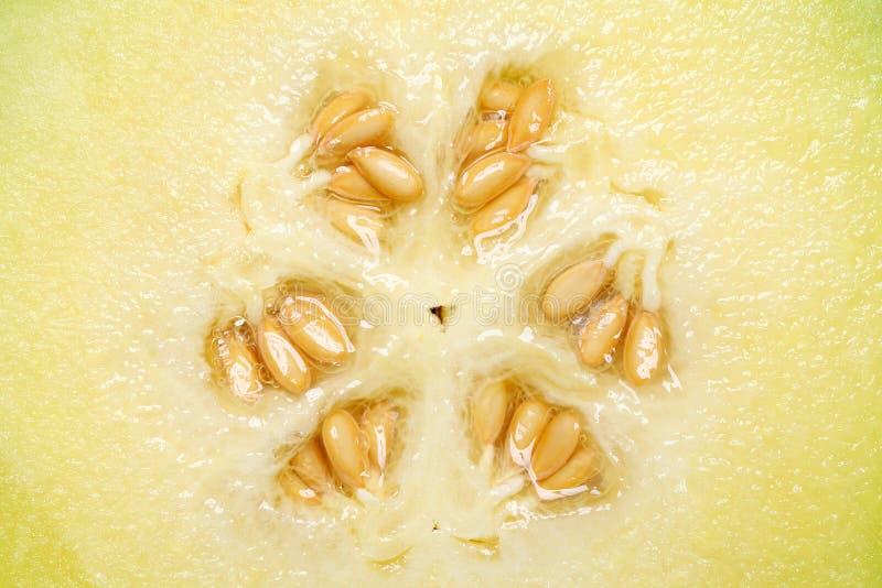 Close up of cantaloupe melon. Ripe cantaloupe melon with seeds, studio shot royalty free stock photo