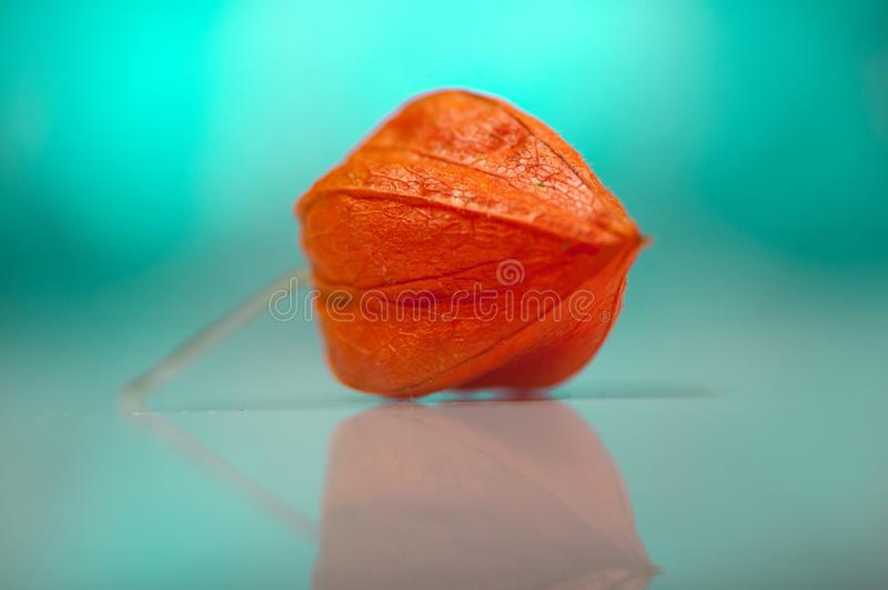 Close-up of cape gooseberry. Shallow depth of field stock photography