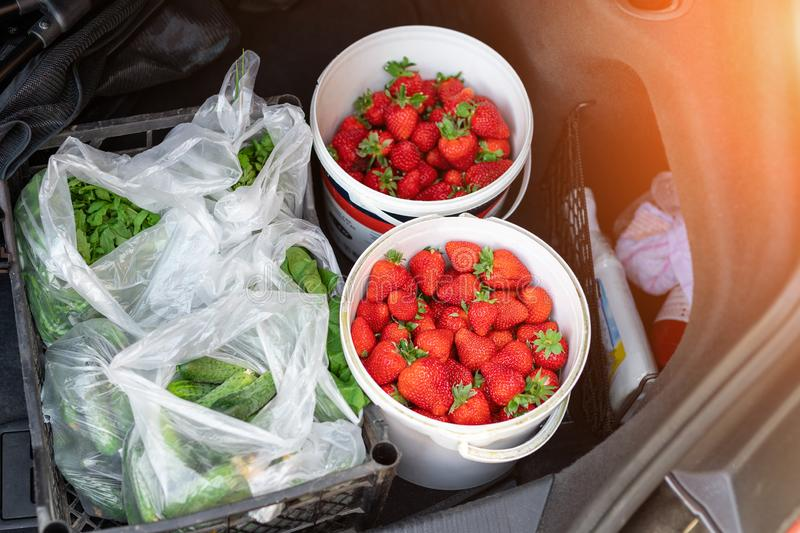 Close-up car trunk with fresh ripe organic vegetables and berries bought  on farmers market. Red juicy sweet strawberries , royalty free stock photo