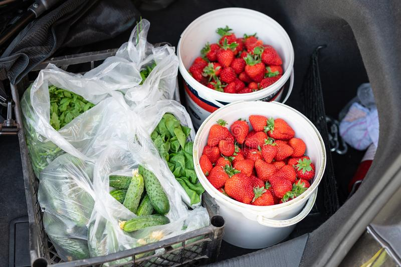Close-up car trunk with fresh ripe organic vegetables and berries bought  on farmers market. Red juicy sweet strawberries , stock photo