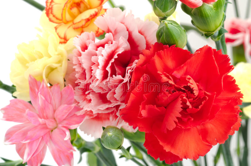 Close up of carnation. Close up of various types carnation flowers stock images