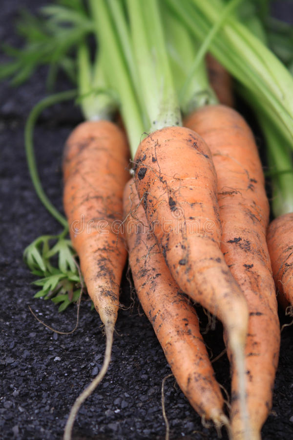 Close Up Carrots royalty free stock photography