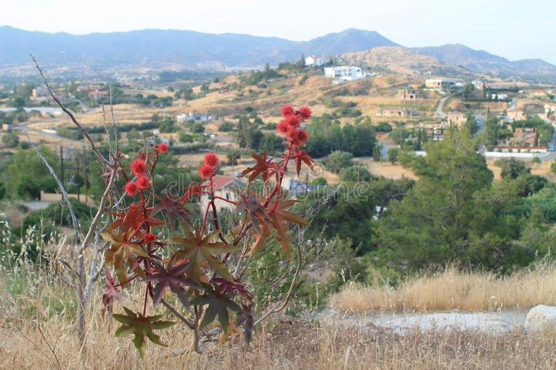 Castor oil plant in the mountains stock photography