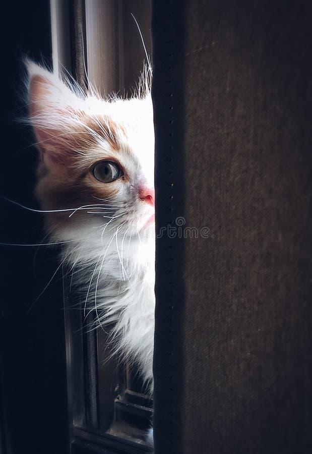 Close-up Of Cat Free Public Domain Cc0 Image