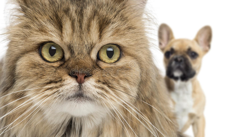 Download Close-up Of A Cat And Dog Hiding Behind, Isolated Stock Photo - Image: 34065102