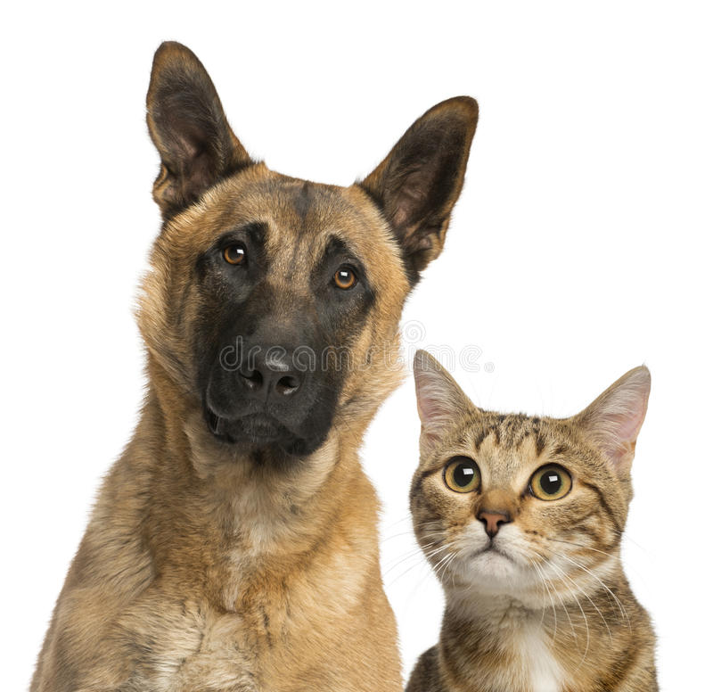 Download Close-up Of A Cat And Dog Royalty Free Stock Photos - Image: 30820038