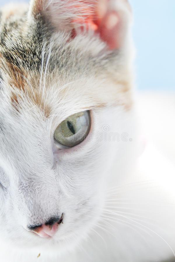 a close up of a cat eye stock photography