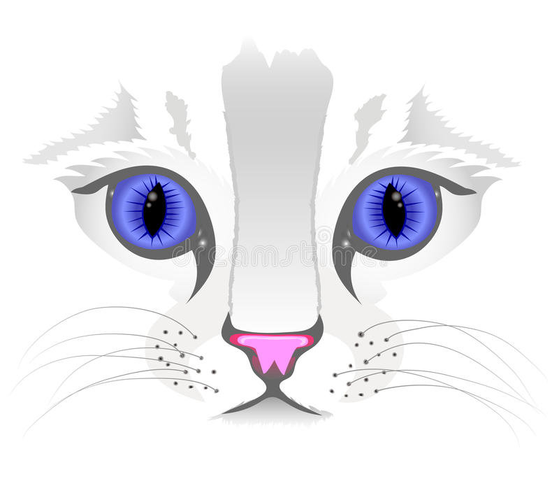Close Up Of Cat Face Stock Image