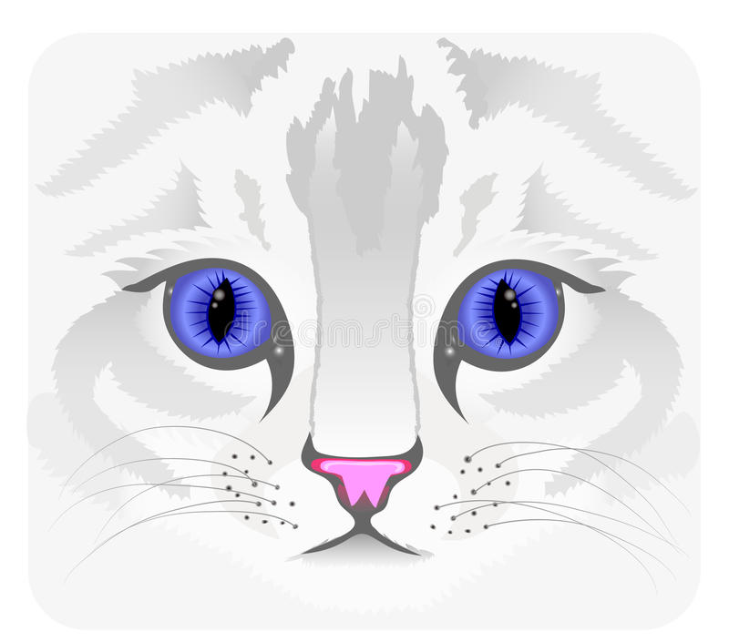 Download Close Up Of Cat Face Stock Photography - Image: 23995152