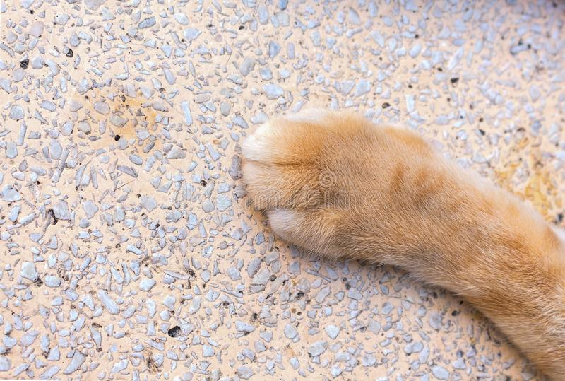 Close up cat foot, Cat`s paws on Stone table. Select focus Cat`s paws and soft-focus background stock photo