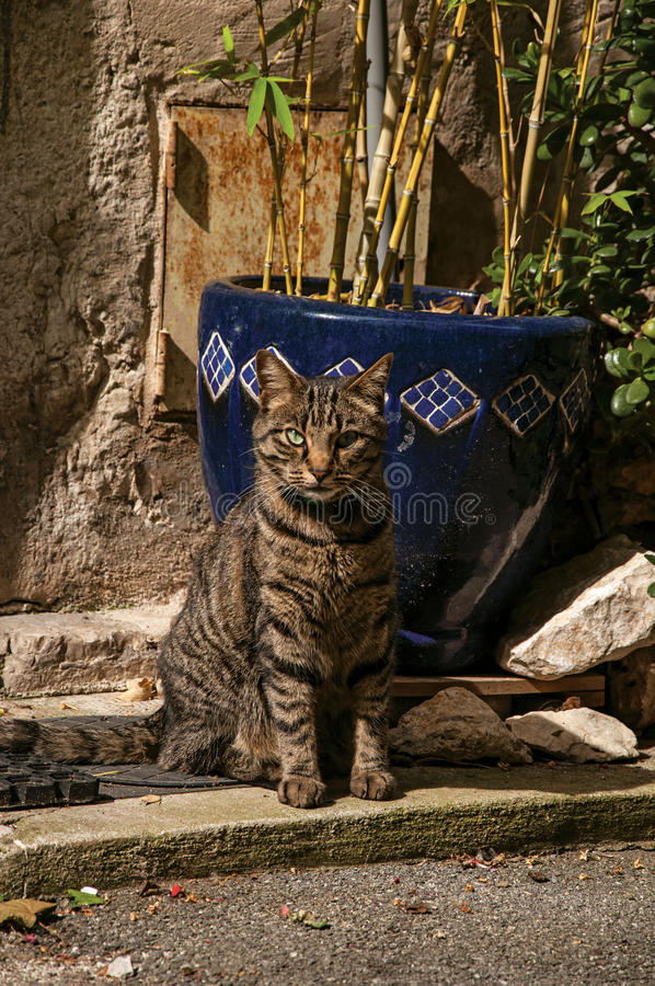 Close-up of cat in front of a door in the light of daybreak in Vence. Close-up of cat in front of a door in the light of daybreak in Vence, a stunning medieval stock images