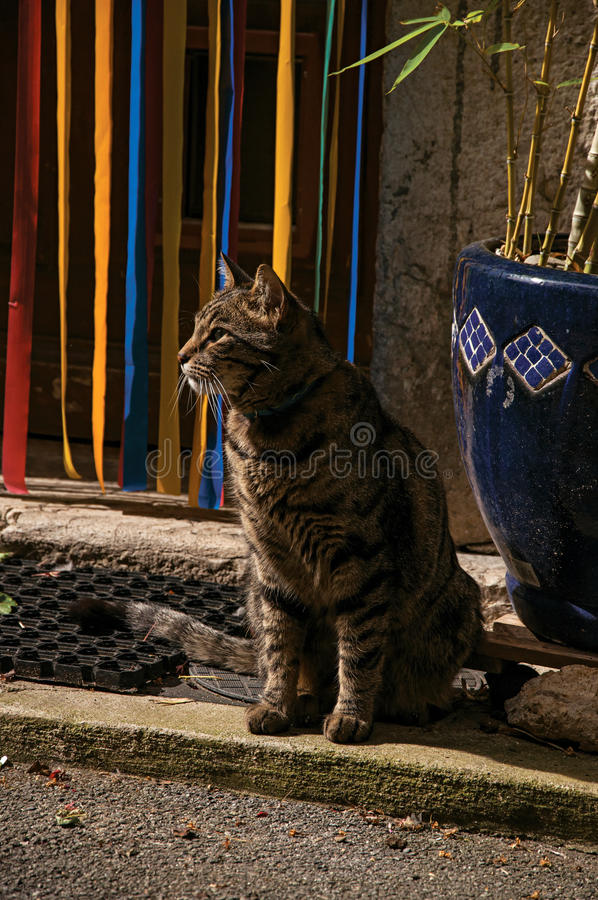 Close-up of cat in front of a door in the light of daybreak in Vence. Close-up of cat in front of a door in the light of daybreak in Vence, a stunning medieval royalty free stock photo