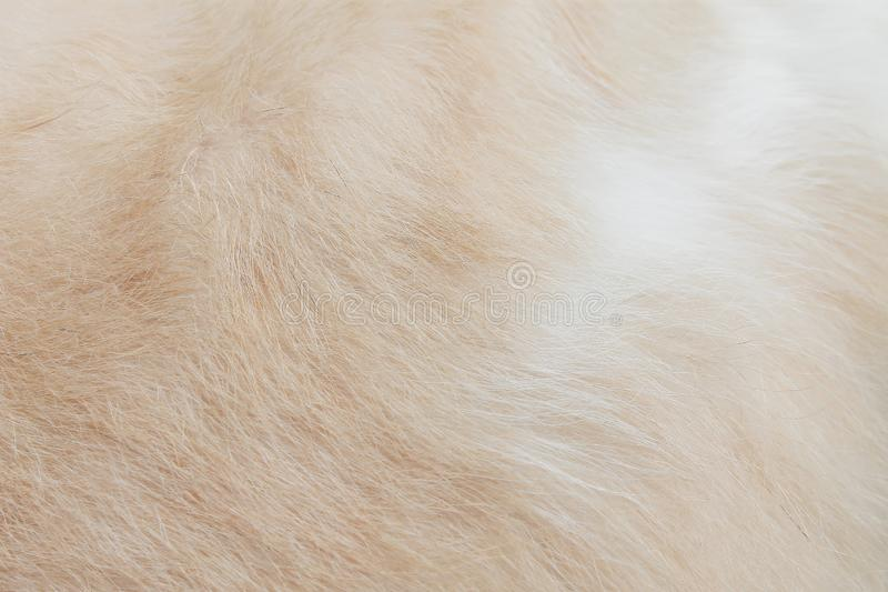 Cat fur texture background ,  fluffy brown with white patterns seamless soft focus royalty free stock images