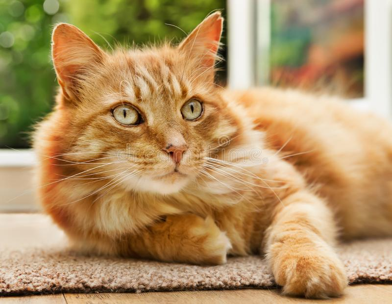 Close-up of a cat lying next to a patio door. Close-up of a relaxed cat lying on a mat next to a patio door leading to the garden stock photography