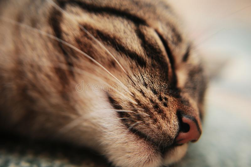 Close up of cat nose stock images