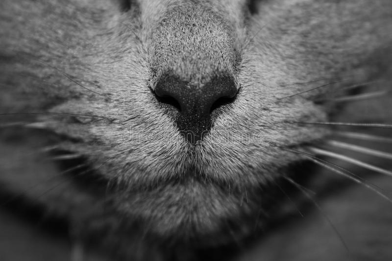 Close Up Of Cat Nose And Whiskers Free Public Domain Cc0 Image