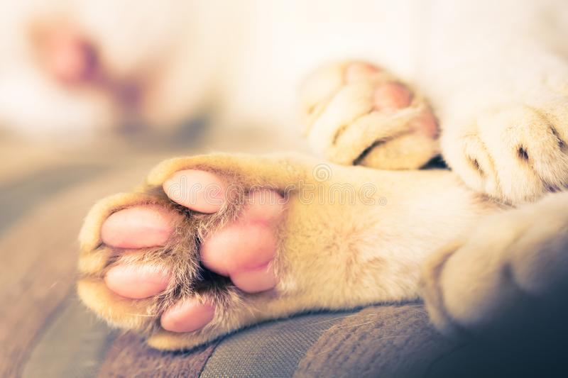 Close-up of cat paws. A cat`s paw from the underside royalty free stock photos