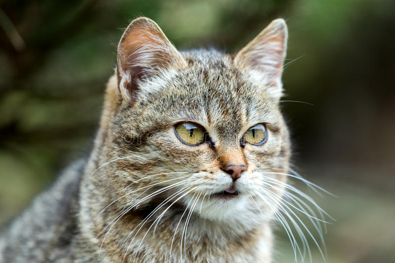 Close up cat portrait royalty free stock images