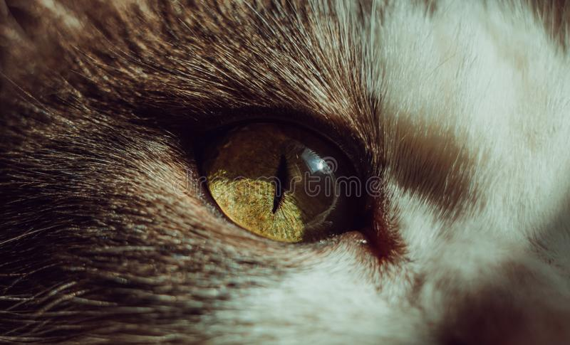 Close up cat`s eye. Green and yellow colors royalty free stock photos