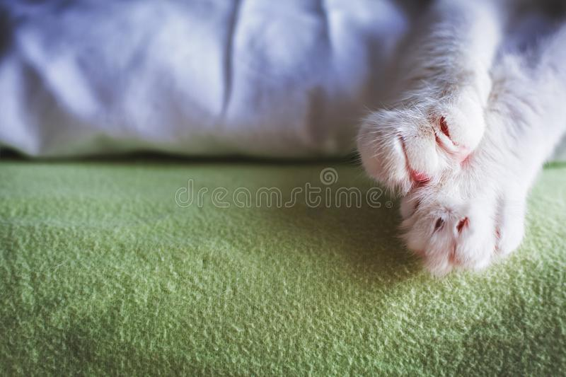 Close up of cat`s paw. Copy space stock photo