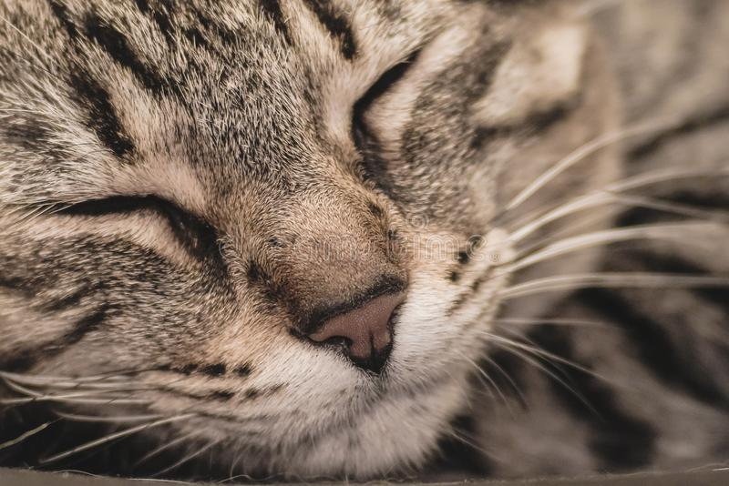 A close up of a a cat sleeping quietly and peacefully. stock photos