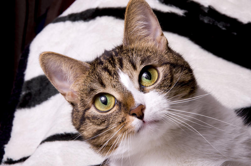 Close up of cats face stock photography