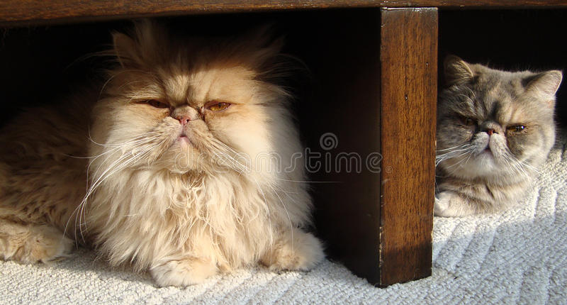 Close-up of cats stock photography