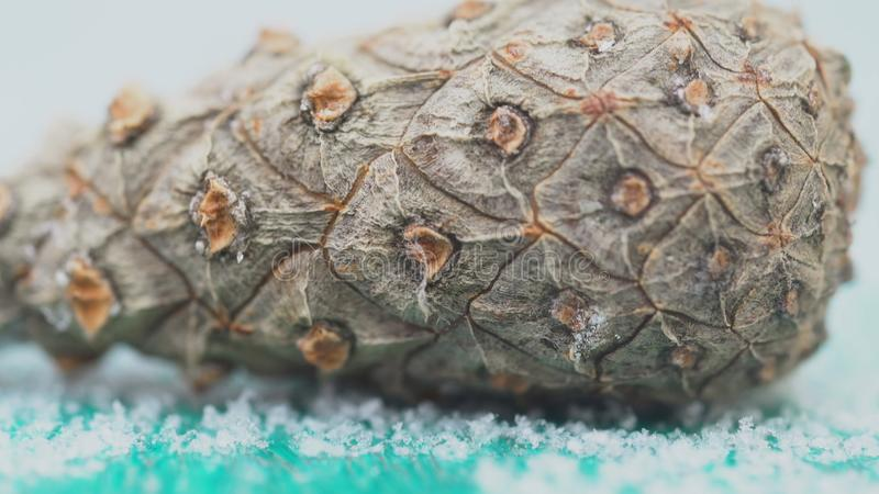 Close-up of cedar cone bark. Organic natural bark of pine cones with texture of wood cells. Close-up shot of bark cones stock photo