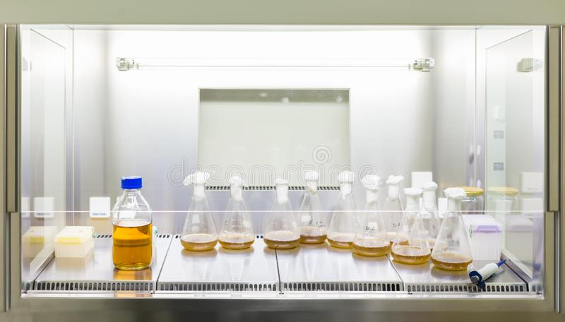 Close up of cell culture samples on LB agar medium in petri dish and flask in laminar flow. Close up of cell culture samples on LB agar medium in petri dish and royalty free stock images