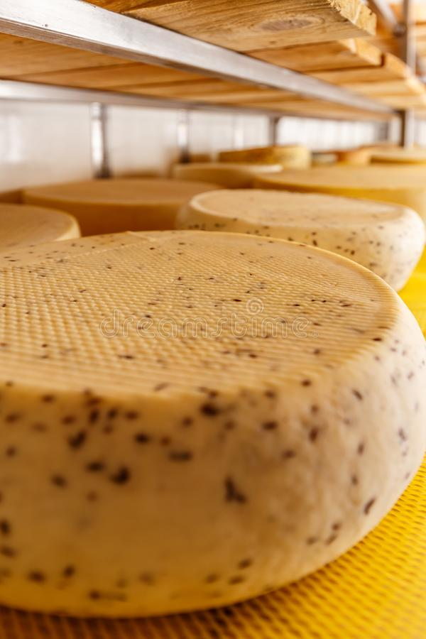 Close up of cheese wheels. On the shelves stock photo