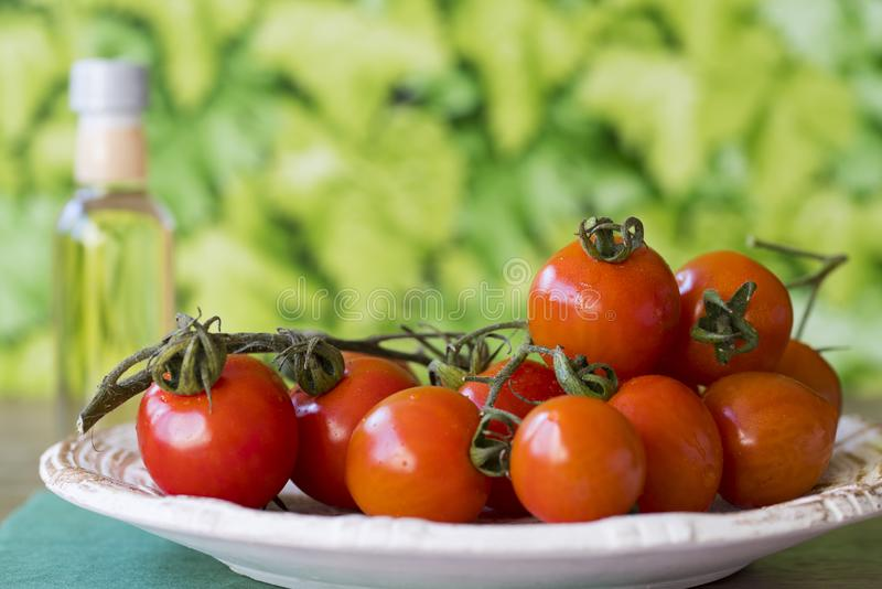 Fresh red cherry or ramano tomatoes on white plate in garden, against green leaf background. Space for text stock photos