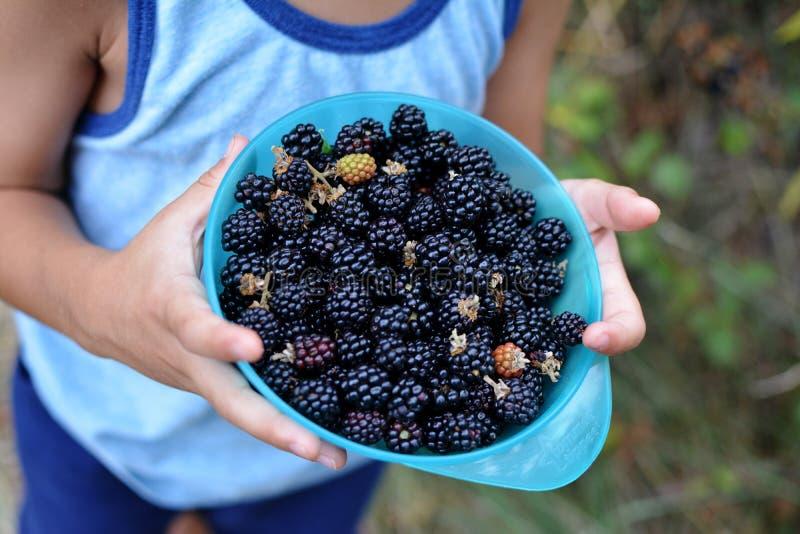 CLOSE UP CHILD PIKING WILD BLACKBERRIES stock image