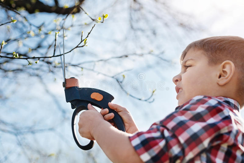 Close up of child pruning fruit trees. Little environmentalist during work. Adorable school boy helping his family and cutting the branches with a pair of stock image