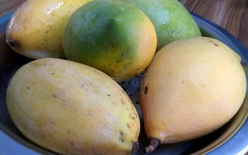 Tropical Yellow Mangoes. A close up click of sweet yellow mango fruit placed in a bowl stock images