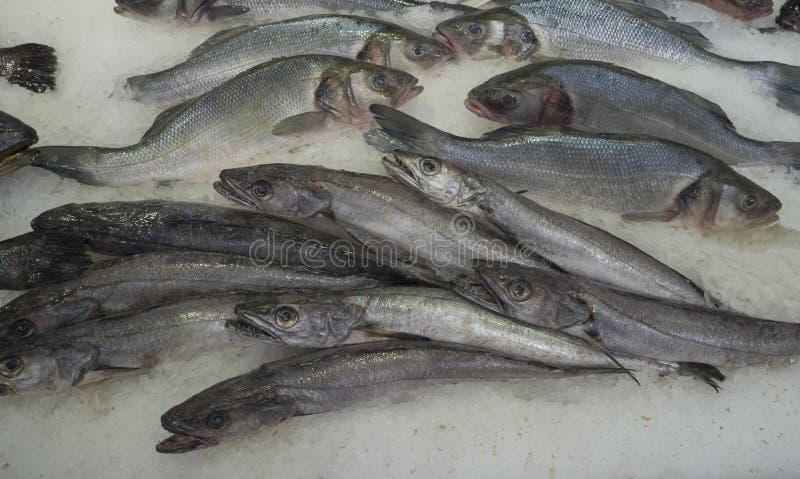 Close up cold iced sea fish on ice Merluccius merluccius Europe stock images