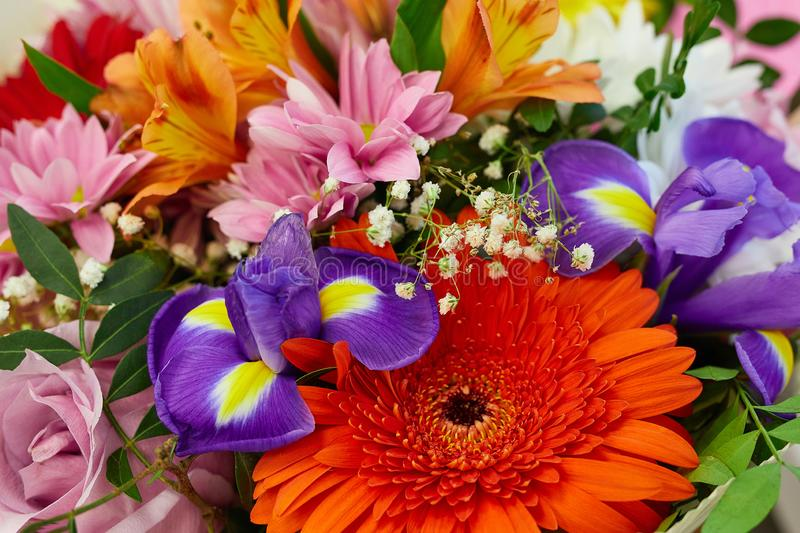 Close-up colorful bouquet of flowers. Red gerbera, pink chrysanthemum, blue irises, pink rose, orange Alstroemeria royalty free stock photography