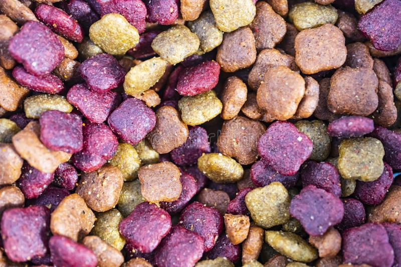 Close up cat food on plate royalty free stock photos
