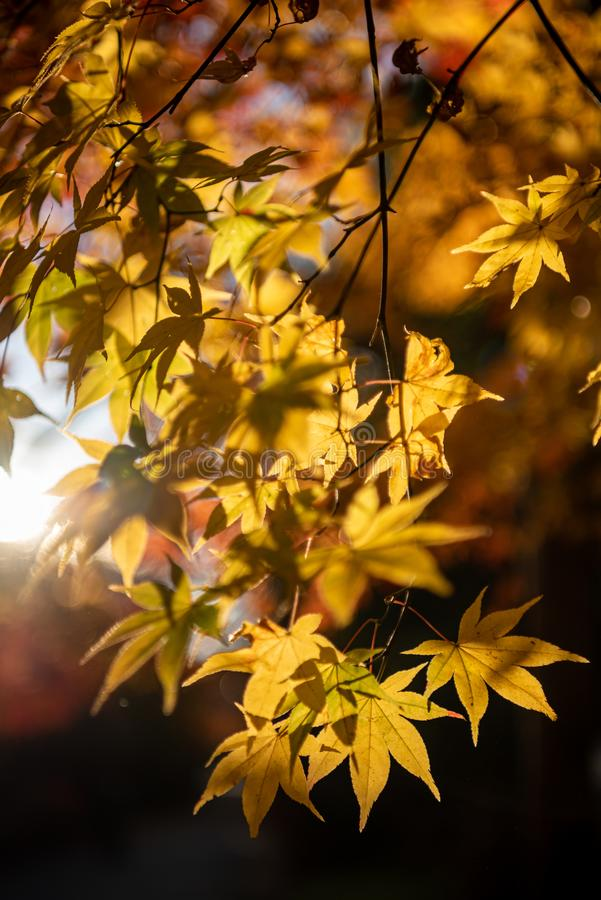 close-up colorful fall foliage in sunny day royalty free stock images