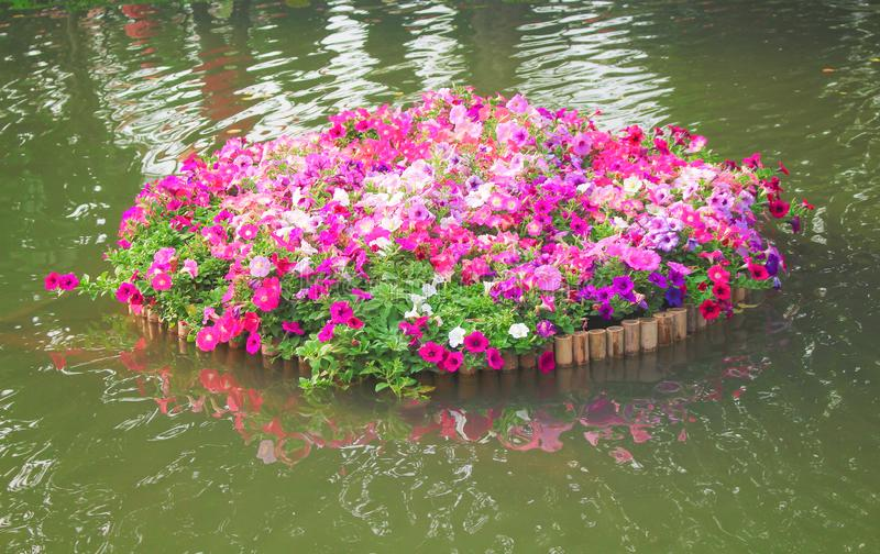Colorful multicolored petunia flowers patterns with green leaves blooming in bamboo raft on nature water background. Close up Colorful multicolored petunia stock image