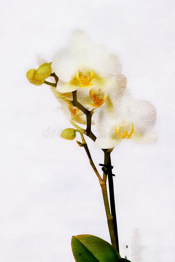 Close up colorful orchid flowers. Close up white orchid flowers, oil painting style vector illustration