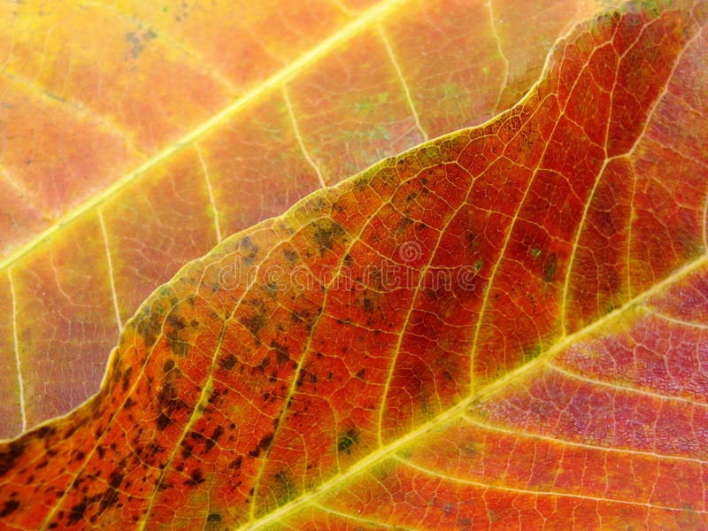 Close up of colorful textures leaf colors. Abstract background royalty free stock photography