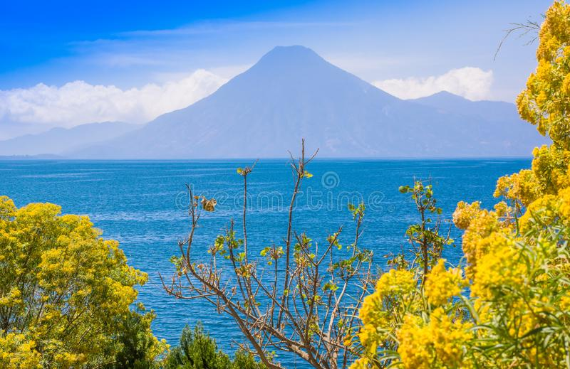 Close up of colorful yellow plants tree with a gorgeus view of Atitlan Lake, is the deepest lake in all of Central royalty free stock photo
